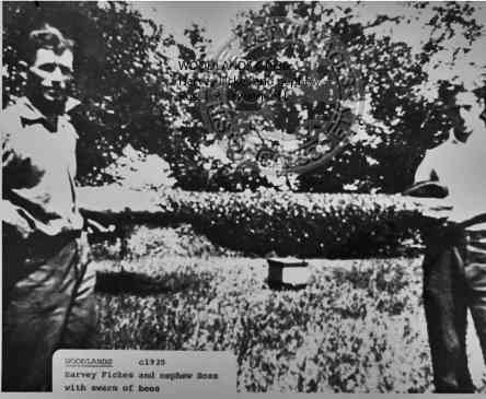 WOODLANDS C1930 Harvey Fickes and nephew Ross with swarm of bees.